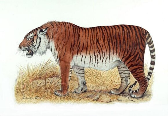 Kaspijos tigras
