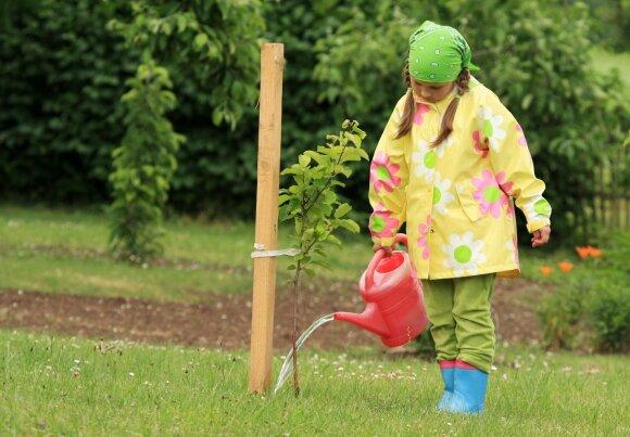Vaismedžių sodinimo ypatumai rudenį