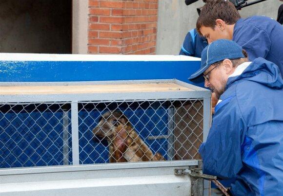 Į laisvę paleidžiami ruoniai