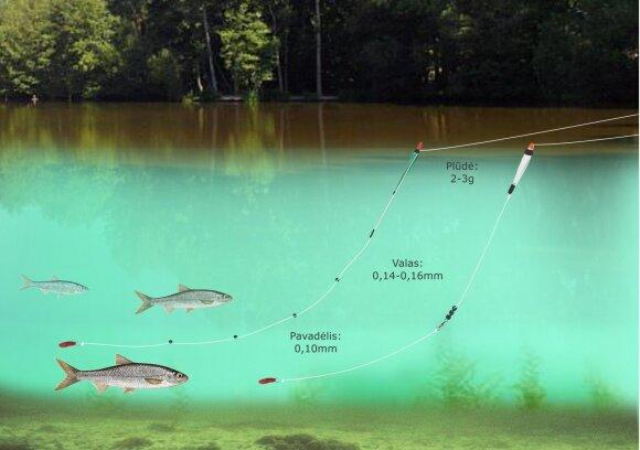 Schema. Strepečių žvejyba