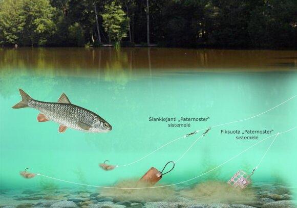 Schema. Šapalų žvejyba rudenį