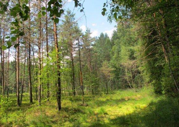 Gyventojų prašoma stovyklauti ne miške, bet specialiose stovyklavietėse