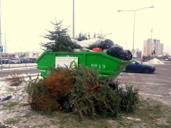 Išmestos kalėdinės eglutės