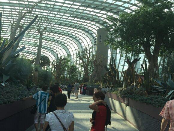 Singapūro botanikos sodai − rojus žemėje