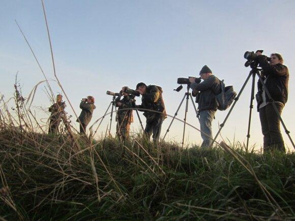 Ventės ragas pritraukia daug paukščių stebėtojų