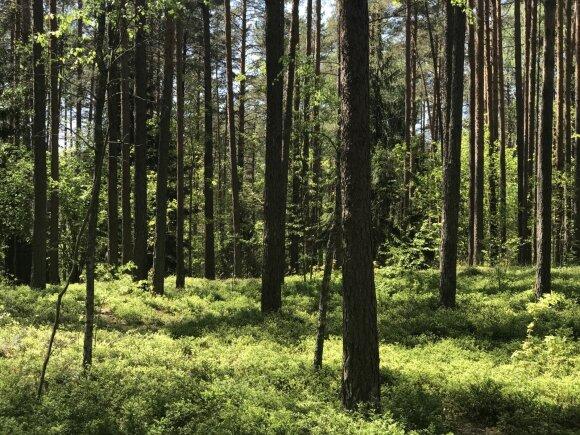 Mokslininkai įspėja: keliuose Lietuvos regionuose galite sutikti naują pavojingą plėšrūną