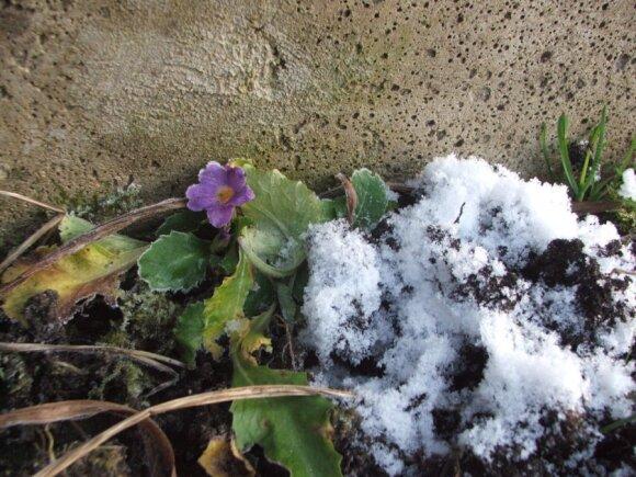 Gamtos išdaigos sausio pradžioje: grybai ir vaivorykštė