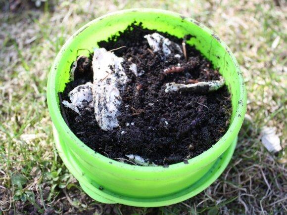 Tinkamiausias mišinys sliekams - komposto žemė ir smulkintas drėgnas popierius