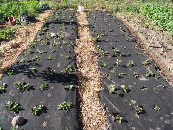 amtinės žemdirbystės pavyzdys Širvintų rajone/ I. Verbylienės nuotr.