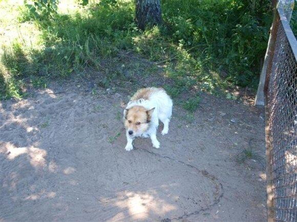"""<font color=""""#6699cc"""">Ieškau namų.</font> Keli šuneliai ieško namų"""