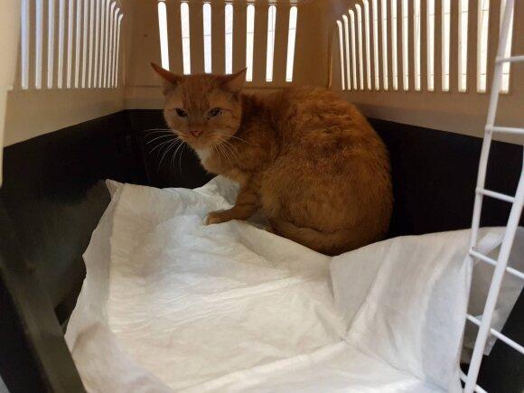 Kastruota katė po operacijos paleidžiama sugavimo vietoje