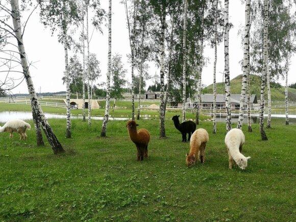 Netoli Vilniaus – laimės terapija tarp gyvūnų: vykdami čia nedarykite vienos klaidos