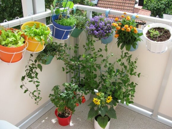 5 ekspertų patarimai ketinantiems balkone įsirengti mini daržą