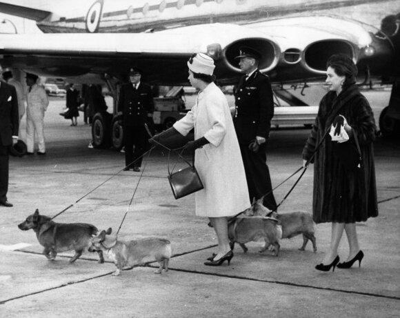 Karalienė Elizabeth II ir jos sesuo princesė Margaret su augintiniais Heathrow oro uoste