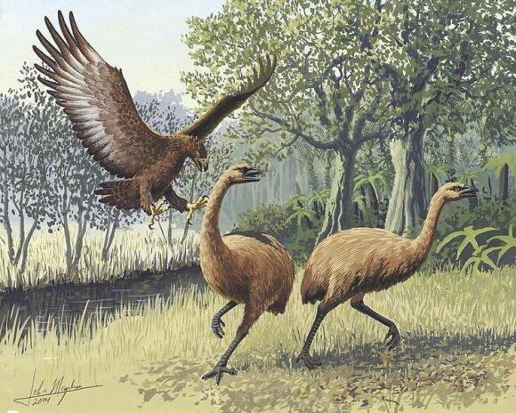Didysis erelis puola Naujosios Zelandijos Moa paukščius (piešinys)