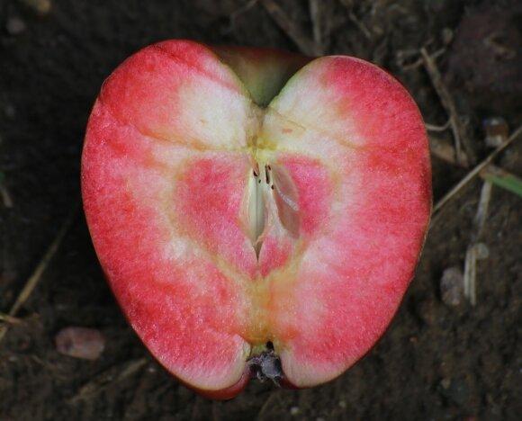 Raudoni obuoliai