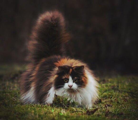 """Patys <span style=""""color: #c00000;"""">pūkuočiausi</span> ir minkščiausi katinai"""