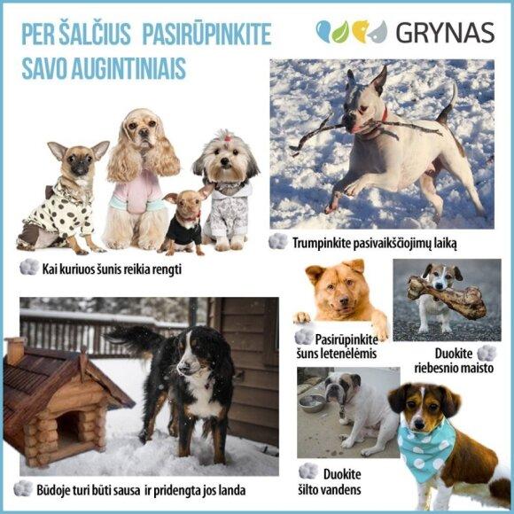 Kaip žiemą pasirūpinti šunimis?