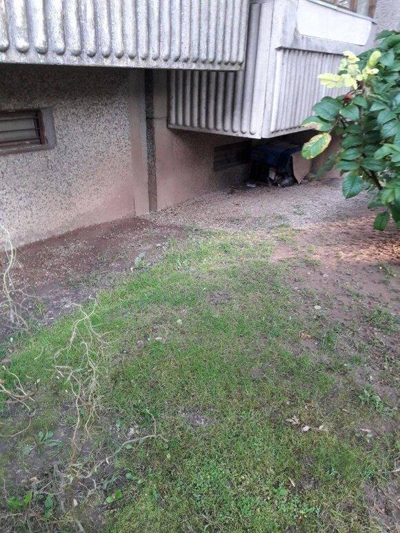 Daugiabučio kiemas virto kačių šėrimo vieta