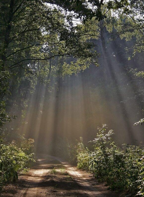 Kelelis mus atvedė į Lančiūnavos mišką