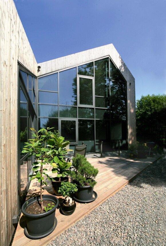 Vasarą terasose veši vazoniniai augalai. Tarp jų – Stasio mėgstamiausi figmedžiai
