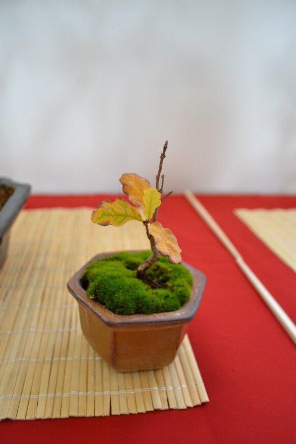 Kusamono - tai šalia bonsai dažnai statomas mažytis žolyno ar kito augaliuko indelis, kad sudarytų kontrastą ar vieningą kompoziciją.