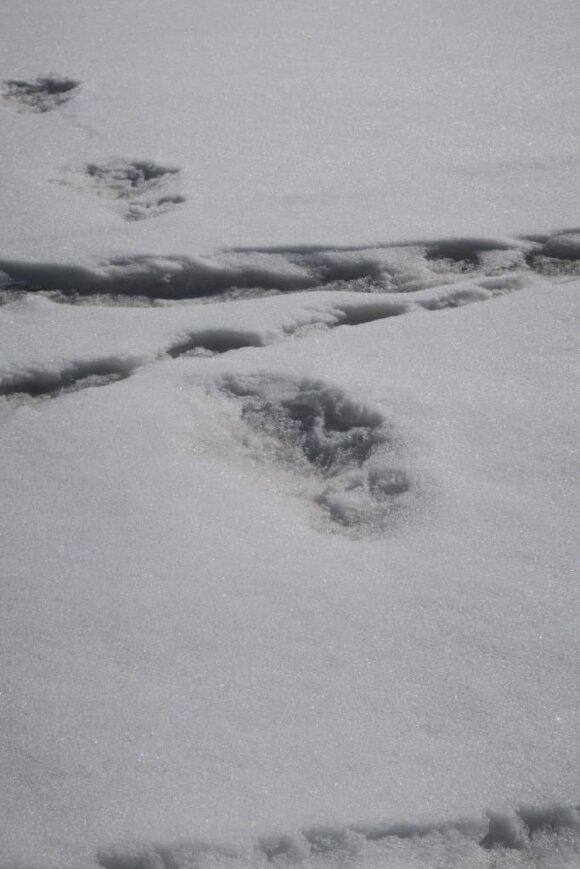Indijos armija paskelbė radusi sniego žmogaus pėdsakus