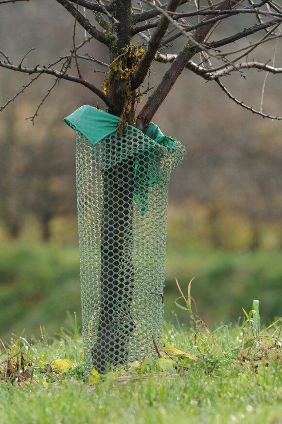Sodo medelių apsauga nuo kiškių
