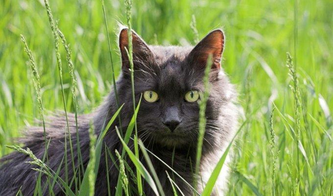 """Lyg iš Stiveno Kingo """"Naminių gyvūnėlių kapinių"""": palaidotas katinas grįžo pas šeimininkus VIDEO"""