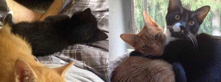 Du katinai ir viena lova - priglausti broliukai nenori išsiskirti