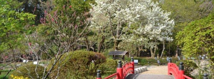 Dažnas akcentas japoniškame sode - medinis tiltelis per vandens telkinį.