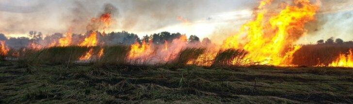 Deganti žolė
