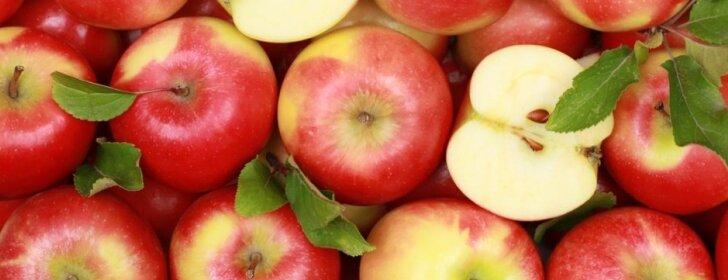 """Ką būtina nuveikti sode, darže, bityne ir gėlyne <span style=""""color: #ff0000;"""">rugsėjo mėnesį</span>"""