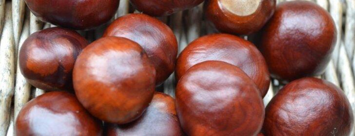 Skubėkite rinkti šias rudens gėrybes – vėliau pravers