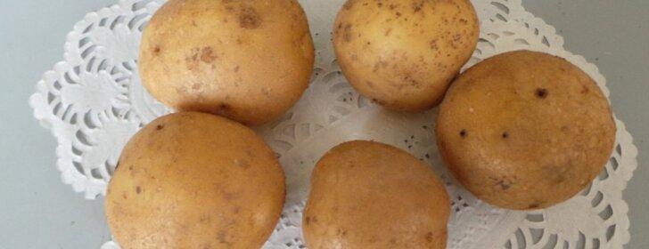 Bulvių sandėliavimo ABC