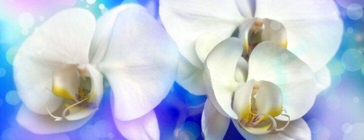 """<span style=""""color: #ff0000;"""">Konkursas:</span> mano gražiausia orchidėja"""