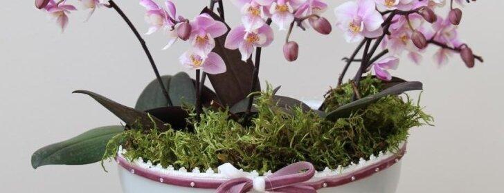 Gėlės, kurios padės pagyvinti nuobodų interjerą