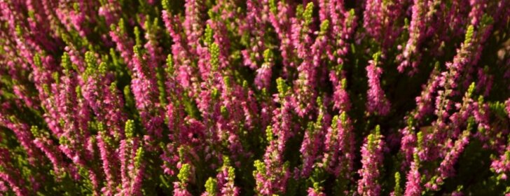 Augalai, kurie praskaidrins niūrią rudens dieną