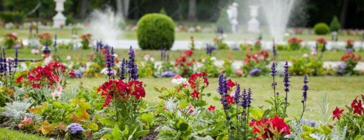 Jeigu visa tai padarysite prieš septynias ryto, turėsite patį nuostabiausią sodą