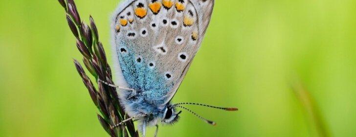 Ką sodinti sode, kad jame skraidytų drugeliai