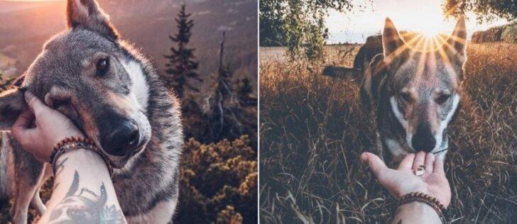 Vaizdai, kurie užburia: su šunimi keliaujantis vyras turi ką parodyti