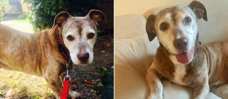 Benamis šuo savo laimės laukė ilgai: senas gyvūnas pagaliau jaučiasi mylimas