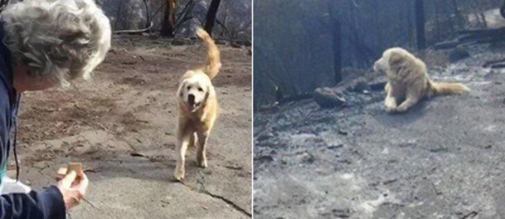 Gaisrą išgyvenęs šuo parodė tikrą ištikimybę: šeimininkų laukė ištisas savaites