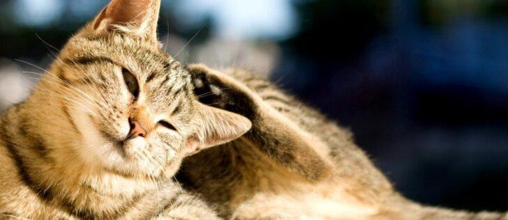 Atšilus orams gyvūnų tyko didžiulis pavojus