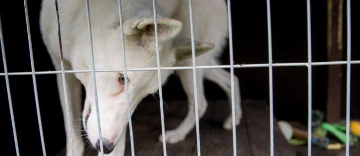 Kodėl beglobių gyvūnų skaičius Lietuvoje auga?