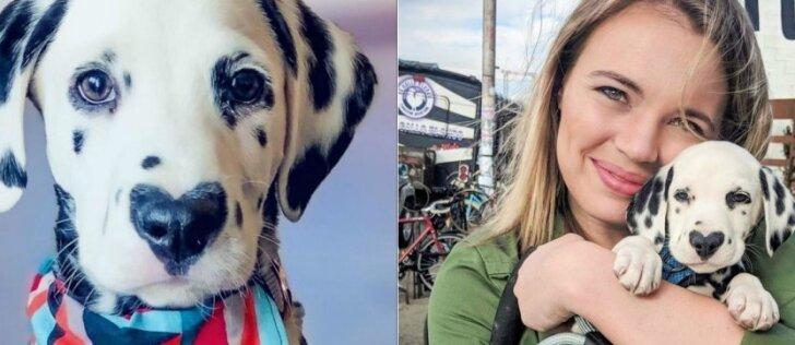 Šunelis, kuriam nėra abejingų: gražuolio nosį puošia širdies formos dėmė