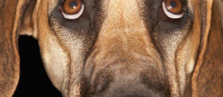 Nuomonė. Mano šuo: norėsiu – užmušiu, norėsiu – pakarsiu!