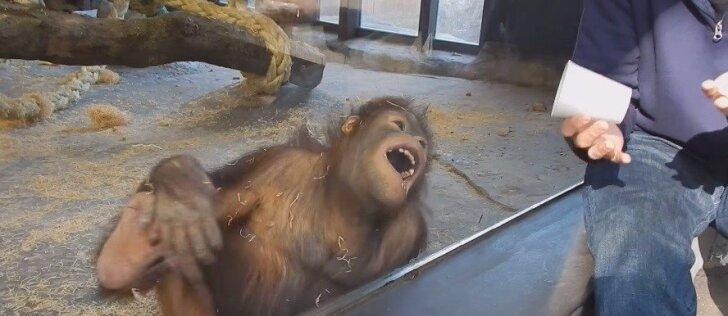 Sunku patikėti, bet gyvūnai kartais irgi juokiasi