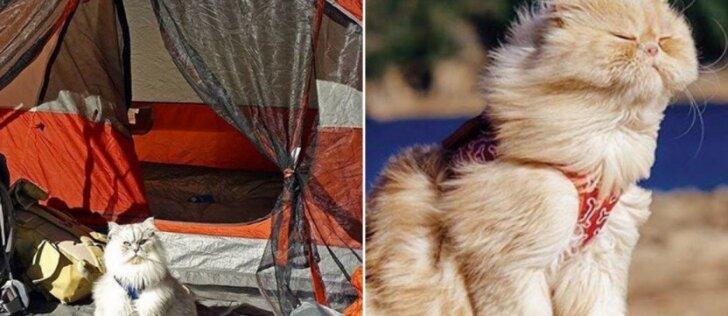 Karališkos kačių atostogos: šito joms gali pavydėti bet kas