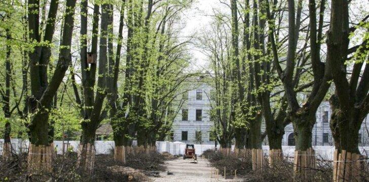 Medžiai miesto centre